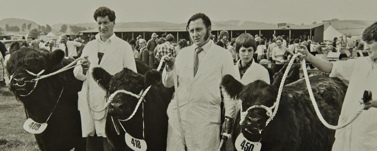Archive image Galloway Beef cattle farmers at show